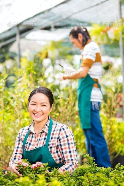 Planting flowers in orangery