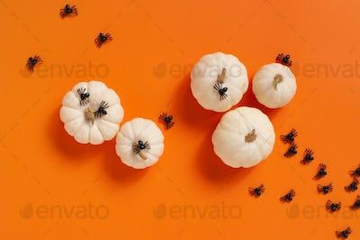 Halloween Pumpkins and Spiders
