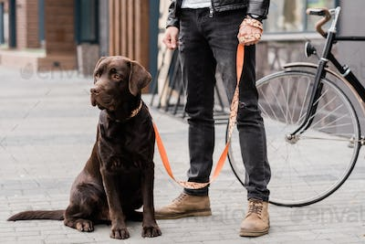 Cute labrador dog sitting on trottoire with his owner standing near by