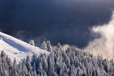 Misty sunrise in the winter forest in the mountains. Alps, Switzerland