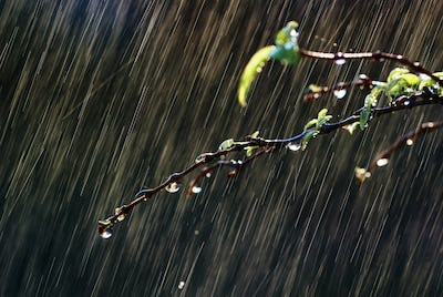 Water drops on leaf and twig on a rainy day