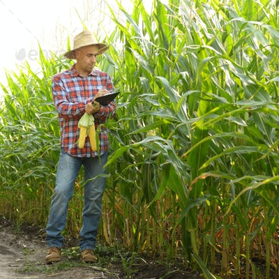 Farmer in straw hat with clipboard inspecting corn at field some