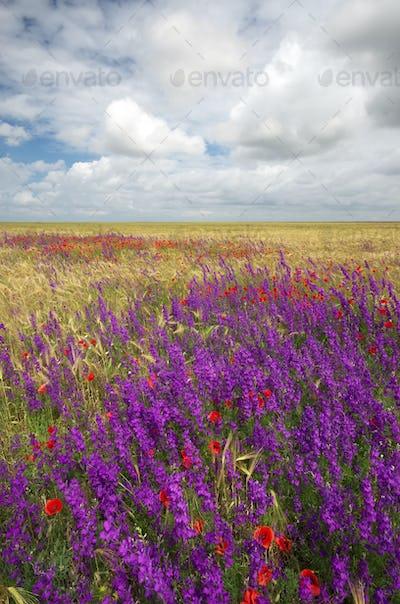 Meadow of spring flowers.