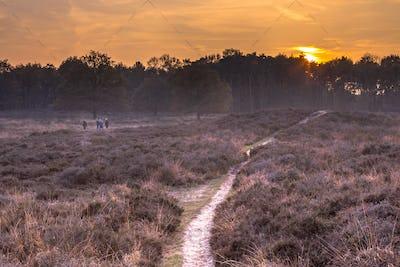 Walking path through heathland in autumn colors