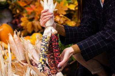 Close up woman choosing colorful corn for Halloween day at autumn farm shop outdoor