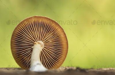 Mushroom spore close up in forrest macro photo