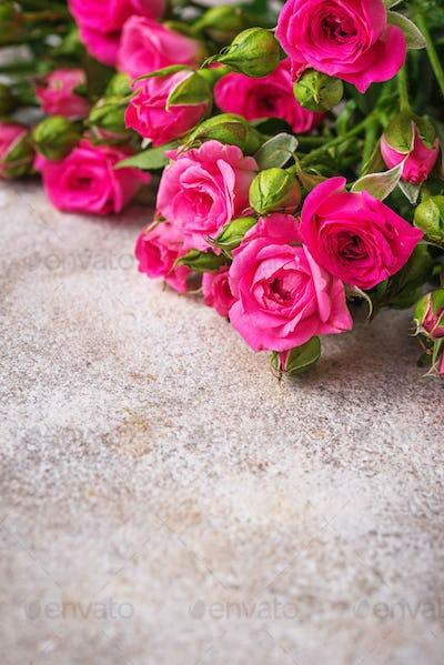 Pink roses on light background