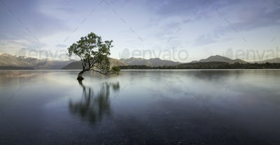 Wanaka tree in the lake reflection