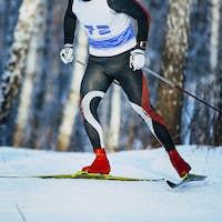 man skier riding in birch forest