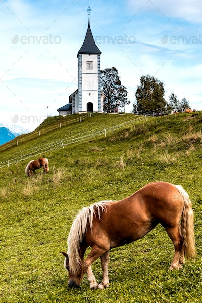 Horse Grazing at Picturesque  Church Of St Primozin Jamnik,Kamn