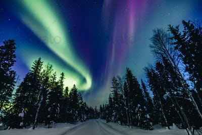 Colorful polar arctic Northern lights Aurora Borealis activity in snow winter forest in Finland