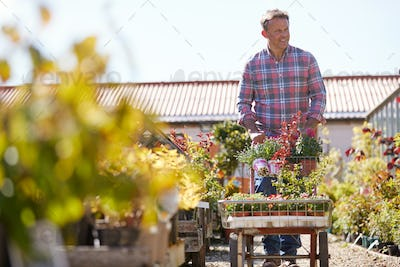 Mature Male Customer Buying Plants And Putting Them On Trolley In Garden Center