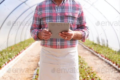 Close Up Of Mature Man Working In Garden Center Greenhouse With Digital Tablet Checking Plants