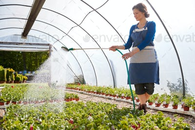 Mature Woman Working In Garden Center Watering Plants In Greenhouse