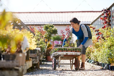 Mature Female Customer Buying Plants And Putting Them On Trolley In Garden Center