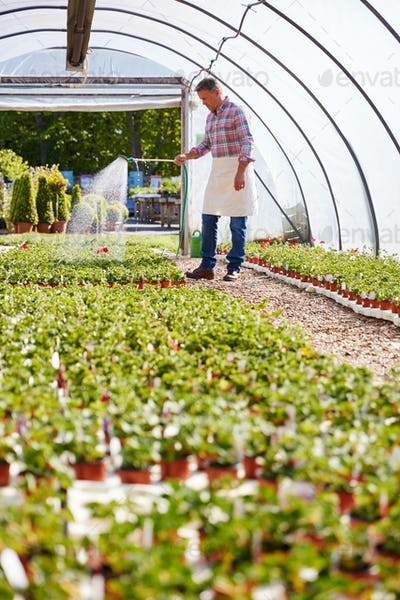 Mature Man Working In Garden Center Watering Plants In Greenhouse