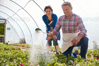 Mature Couple Working In Garden Center Watering Plants In Greenhouse