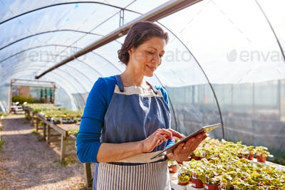 Mature Woman Working In Garden Center Greenhouse Holding Digital Tablet And Checking Plants