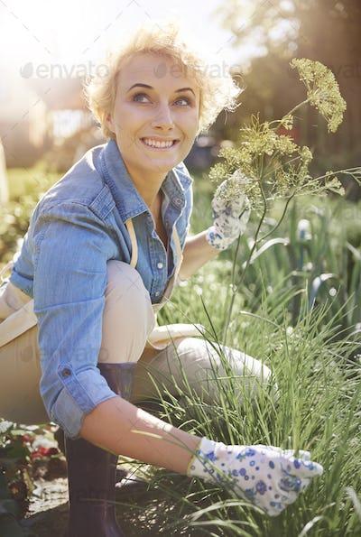 Woman is gardening her plants in farm