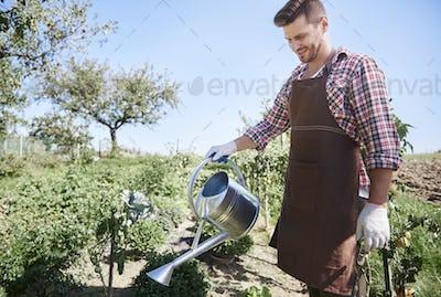 Farmer is watering plants in field