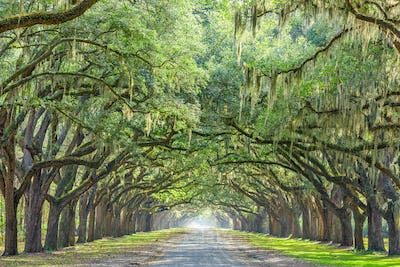 Savannah, Georgia, USA Tree Lined Way