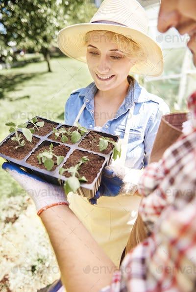 Woman looking at small seedlings