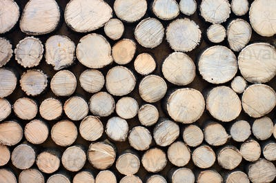 Log background texture.