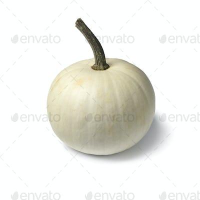 Whole single white Lumina pumpkin