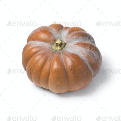 Whole fresh Moschata pumpkin