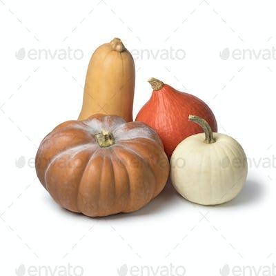 Diversity of fresh pumpkins
