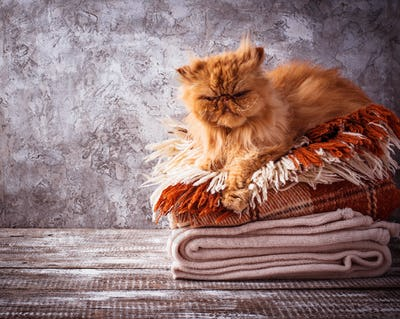 Ginger cat lying on a stack of plaids