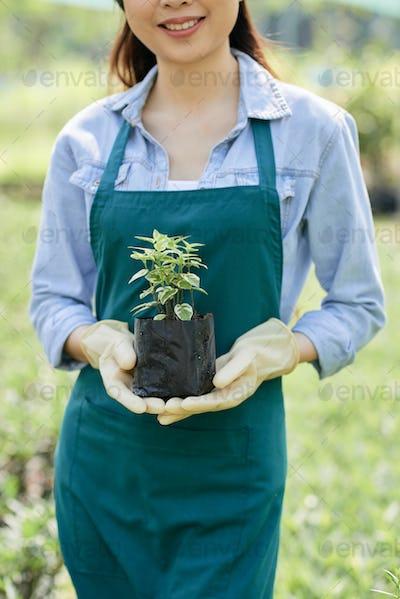 Gardener holding plant