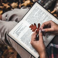 Autumn concept, an open book in the hands of a girl with yellow leaves