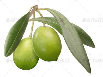 Green olives on branch w leaves, paths