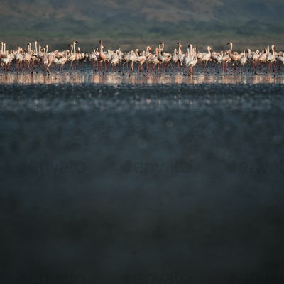 Flock of flamingoes by river, Tanzania, Africa