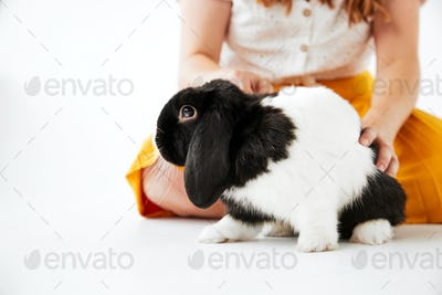 Close Up Of Child Stroking Miniature Black And White Flop Eared Rabbit On White Background