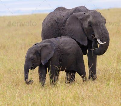Serengeti np-836