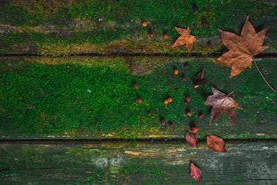 Old wooden table with moss and scattered fallen leaves. Autumn texture with copy space