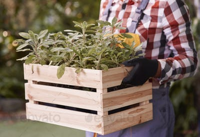 Unrecognizable man holding wooden crate with seedling