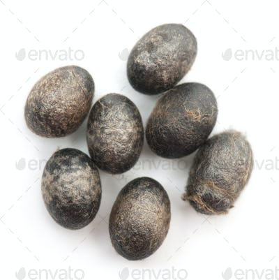 Insect's eggs in front of white background