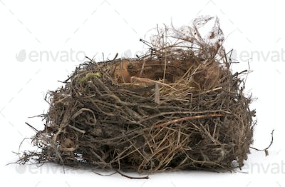 Focus stacking of a Nest of Common Blackbird in front of white background