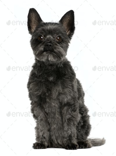 Crossbreed dog, 9 years old, sitting in front of white background