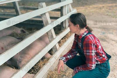 Farmer on pig raising and breeding farm