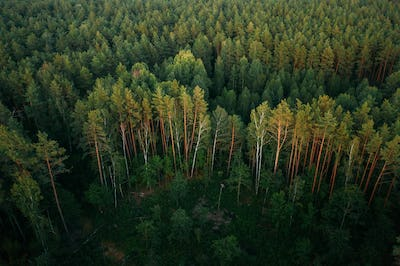 Aerial View Of Green Forest Landscape. Top View From High Attitu