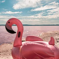 inflatable pink pelican mattress on pink sea