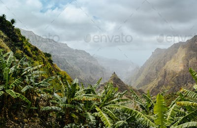 Banana plants on the trekking route to Xo-Xo valley. Harsh peaks of the mountains in background
