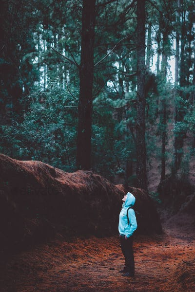 Traveler wearing hood in the mysterious lush pine forest and loking up to fever tree. Santo Antao