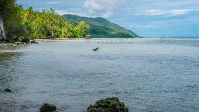 Dog hunting in Water during low Tide on Kri Island, Raja Ampat, Indonesia, West Papua