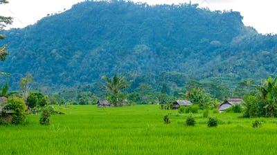 Rice tarraces and some huts between, Sidemen, Bali, Indonesia