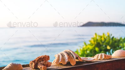 Sea Mussels Shells on Parapet of an Homestay on Gam Island, West Papuan, Raja Ampat, Indonesia